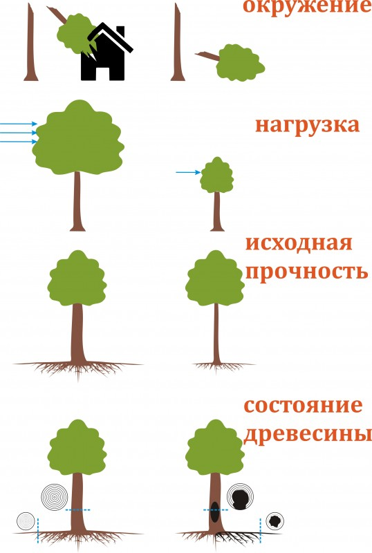 Доктор Лес. Оценка безопасности дерева
