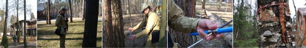 Доктор Лес - Обследование деревьев