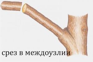 Кронирование 2