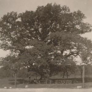 Уход за деревьями в 20-х годах.