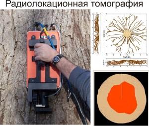 Георадар (TreeRadar ®)