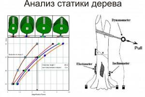 Анализ статистики дерева.