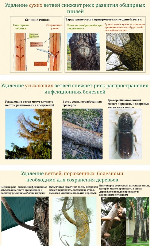 Обрезка сухих ветвей, обрезка ветвей, аварийные деревья