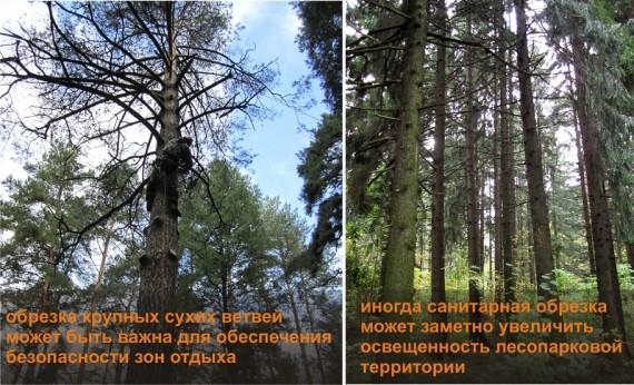 Обрезка сухих ветвей